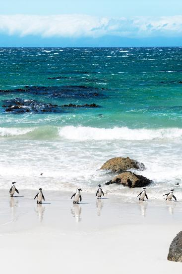 Awesome South Africa Collection - African Penguins at Boulders Beach V-Philippe Hugonnard-Photographic Print