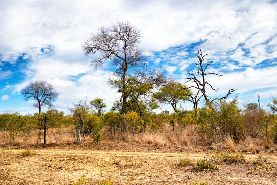 Awesome South Africa Collection - African Savanna Trees X-Philippe Hugonnard-Photographic Print