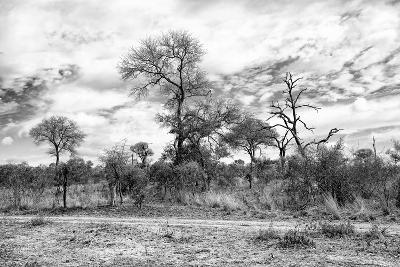 Awesome South Africa Collection B&W - African Landscape II-Philippe Hugonnard-Photographic Print