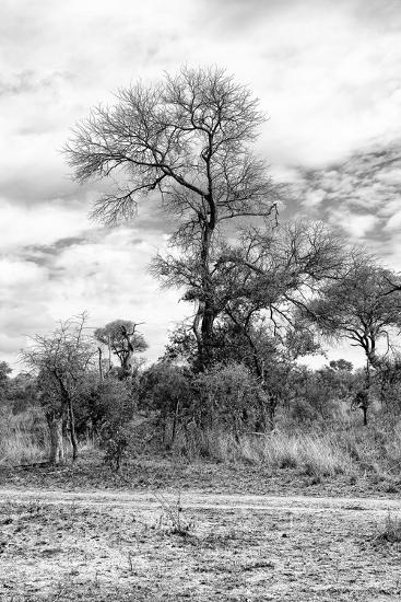 Awesome South Africa Collection B&W - African Landscape III-Philippe Hugonnard-Photographic Print