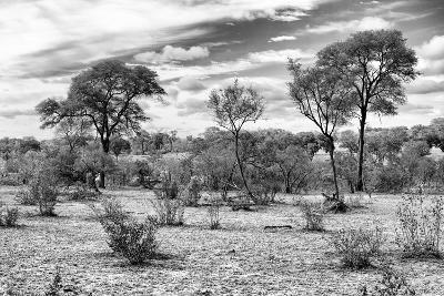 Awesome South Africa Collection B&W - African Landscape IV-Philippe Hugonnard-Photographic Print