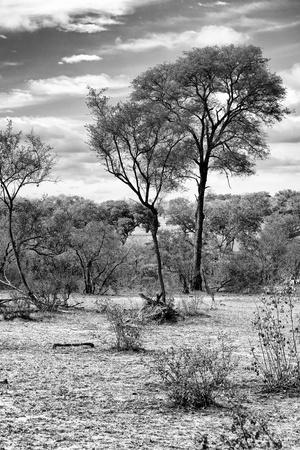 Awesome South Africa Collection B&W - African Landscape V-Philippe Hugonnard-Photographic Print