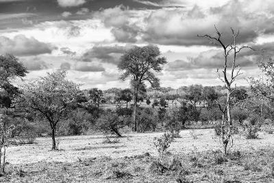 Awesome South Africa Collection B&W - African Landscape VII-Philippe Hugonnard-Photographic Print