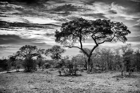Awesome South Africa Collection B&W - African Landscape ...