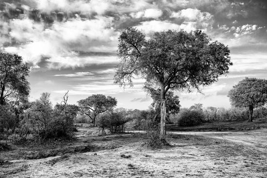 Awesome South Africa Collection B&W - African Landscape with Acacia Tree IX-Philippe Hugonnard-Photographic Print