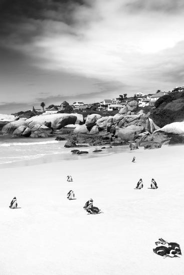 Awesome South Africa Collection B&W - African Penguins at Foxi Beach II-Philippe Hugonnard-Photographic Print