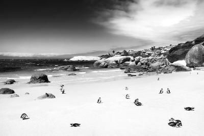 Awesome South Africa Collection B&W - African Penguins at Foxi Beach-Philippe Hugonnard-Photographic Print