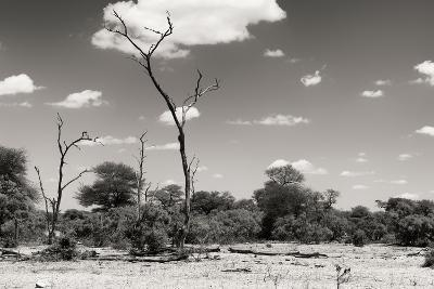 Awesome South Africa Collection B&W - African Savannah Landscape II-Philippe Hugonnard-Photographic Print