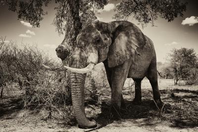 https://imgc.artprintimages.com/img/print/awesome-south-africa-collection-b-w-elephant-iv_u-l-q120ojn0.jpg?p=0