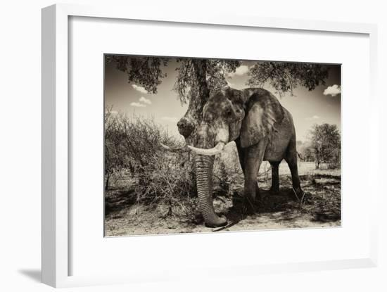 Awesome South Africa Collection B&W - Elephant IV-Philippe Hugonnard-Framed Photographic Print