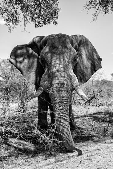 Awesome South Africa Collection B&W - Elephant Portrait V-Philippe Hugonnard-Photographic Print