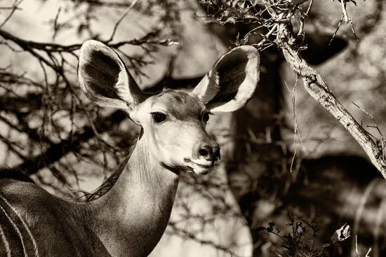 Awesome South Africa Collection B&W - Portrait of Nyala Antelope-Philippe Hugonnard-Photographic Print