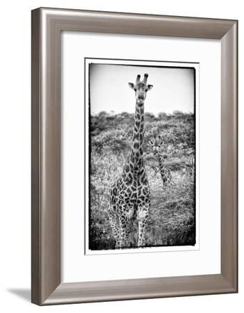 Awesome South Africa Collection B&W - Portrait of Two Giraffes-Philippe Hugonnard-Framed Photographic Print