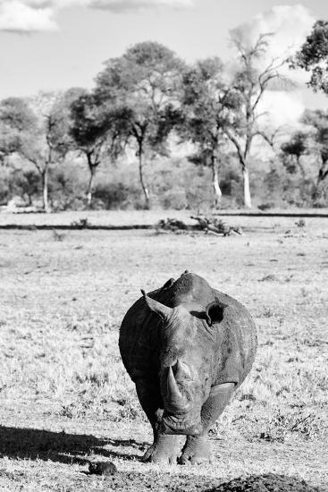 Awesome South Africa Collection B&W - White Rhino-Philippe Hugonnard-Photographic Print