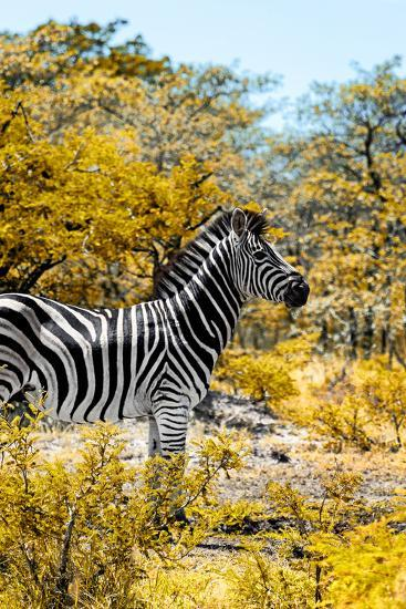 Awesome South Africa Collection - Burchell's Zebra VII-Philippe Hugonnard-Photographic Print