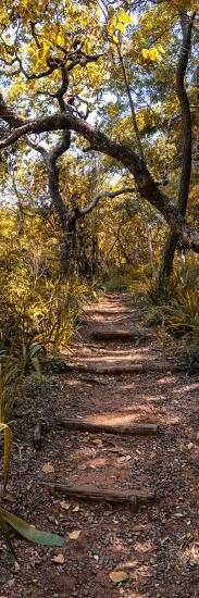 Awesome South Africa Collection Panoramic - African Forest Fall Colors II-Philippe Hugonnard-Photographic Print