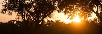 Awesome South Africa Collection Panoramic - African Sunrise Trees-Philippe Hugonnard-Photographic Print