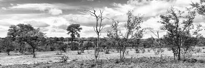 Awesome South Africa Collection Panoramic - Beautiful Savannah Landscape II B&W-Philippe Hugonnard-Photographic Print