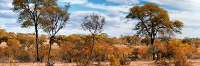 Awesome South Africa Collection Panoramic - Beautiful Savannah Landscape II-Philippe Hugonnard-Photographic Print