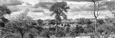 Awesome South Africa Collection Panoramic - Beautiful Savannah Landscape III B&W-Philippe Hugonnard-Photographic Print