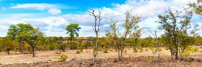 Awesome South Africa Collection Panoramic - Beautiful Savannah Landscape III-Philippe Hugonnard-Photographic Print