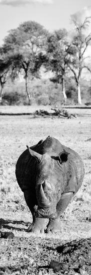 Awesome South Africa Collection Panoramic - Black Rhino B&W-Philippe Hugonnard-Photographic Print