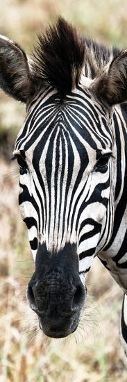 Awesome South Africa Collection Panoramic - Close-up Zebra Portrait-Philippe Hugonnard-Photographic Print