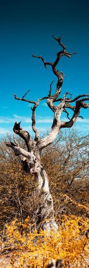 Awesome South Africa Collection Panoramic - Dead Tree II-Philippe Hugonnard-Photographic Print