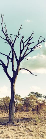 Awesome South Africa Collection Panoramic - Dead Tree in the Savannah II-Philippe Hugonnard-Photographic Print