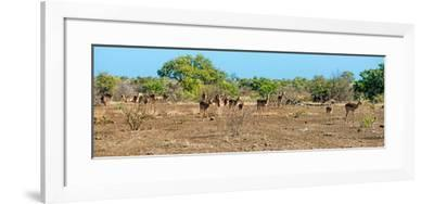 Awesome South Africa Collection Panoramic - Herd of Impalas-Philippe Hugonnard-Framed Photographic Print