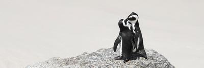 https://imgc.artprintimages.com/img/print/awesome-south-africa-collection-panoramic-penguins-kissing_u-l-q120hp10.jpg?p=0