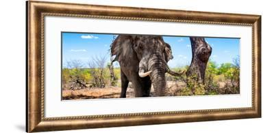 Awesome South Africa Collection Panoramic - Portrait of African Elephant in Savannah III-Philippe Hugonnard-Framed Photographic Print