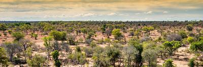 Awesome South Africa Collection Panoramic - Wide Landscape with Trees-Philippe Hugonnard-Photographic Print