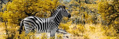 Awesome South Africa Collection Panoramic - Zebra Profile with Yellow Savanna-Philippe Hugonnard-Photographic Print