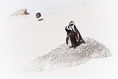 Awesome South Africa Collection - Penguin Lovers II-Philippe Hugonnard-Photographic Print