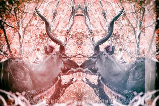 Awesome South Africa Collection - Reflection of Greater Kudu - Red & Dimgray-Philippe Hugonnard-Photographic Print