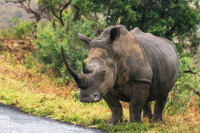 Awesome South Africa Collection - Rhinoceros-Philippe Hugonnard-Photographic Print