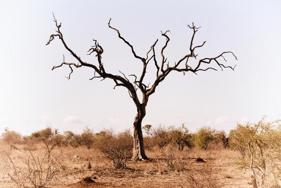 Awesome South Africa Collection - Savanna Tree IX-Philippe Hugonnard-Photographic Print
