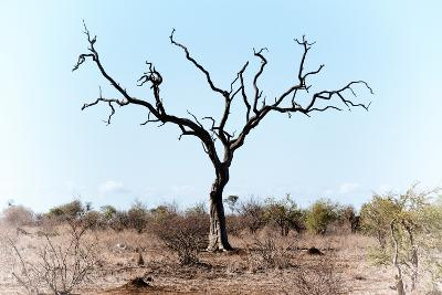 Awesome South Africa Collection - Savanna Tree VIII-Philippe Hugonnard-Photographic Print