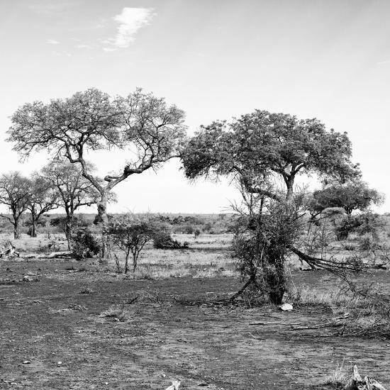 Awesome South Africa Collection Square - African Landscape with Acacia Trees B&W-Philippe Hugonnard-Photographic Print