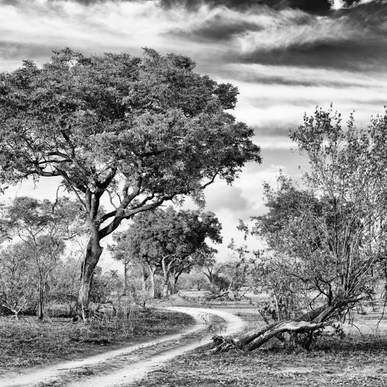 Awesome South Africa Collection Square - African Safari Road B&W-Philippe Hugonnard-Photographic Print
