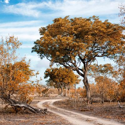 Awesome South Africa Collection Square - African Safari Road with Fall Colors-Philippe Hugonnard-Photographic Print