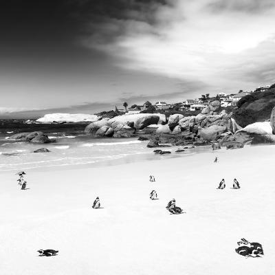Awesome South Africa Collection Square - Colony of Penguins B&W-Philippe Hugonnard-Photographic Print