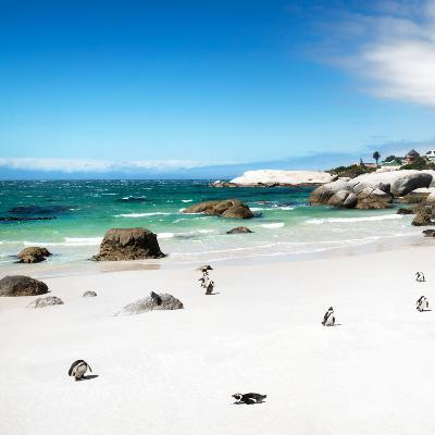 Awesome South Africa Collection Square - Colony of Penguins II-Philippe Hugonnard-Photographic Print