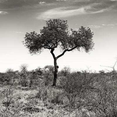 Awesome South Africa Collection Square - One Acacia Tree B&W-Philippe Hugonnard-Photographic Print