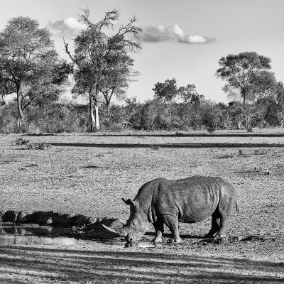 Awesome South Africa Collection Square - Rhinoceros in Savanna Landscape-Philippe Hugonnard-Photographic Print