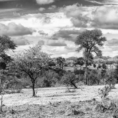Awesome South Africa Collection Square - Savanna Landscape IV B&W-Philippe Hugonnard-Photographic Print
