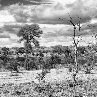Awesome South Africa Collection Square - Savanna Landscape VI B&W-Philippe Hugonnard-Photographic Print