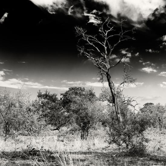 Awesome South Africa Collection Square - Savannah Trees B&W-Philippe Hugonnard-Photographic Print