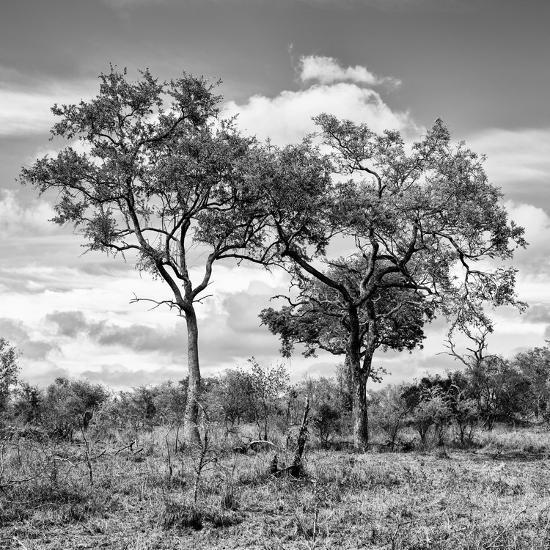 Awesome South Africa Collection Square - Savannah Trees II B&W-Philippe Hugonnard-Photographic Print